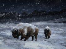 3D rendering dwa majestatyczny żubr w zima krajobrazie ilustracji