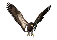 3D Rendering Eagle on White Stock Photos