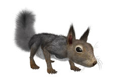 3D Rendering Eastern Grey Squirrel on White. 3D rendering of an Eastern grey squirrel isolated on white background Stock Photos