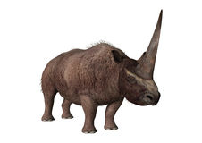 3D Rendering Elasmotherium on White Stock Images