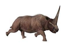 3D Rendering Elasmotherium on White Royalty Free Stock Image