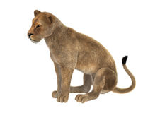 3D Rendering Female Lion on White Royalty Free Stock Photos
