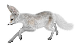 3D Rendering Fennec Fox on White Stock Photos