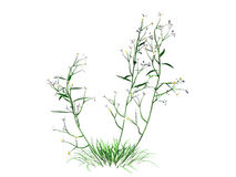 3d rendering of flower bush isolated on white can be used for fo. Reground design Stock Photography