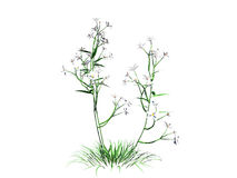 3d rendering of flower bush isolated on white can be used for fo. Reground design Stock Image