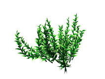 3d rendering of flower bush isolated on white can be used for fo. Reground design Royalty Free Stock Image