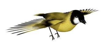 3D Rendering Songbird Goldflinch on White. 3D rendering of a flying songbird goldfinch isolated on white background Stock Photo