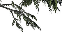3d rendering of a foreground tree branch isolated on white backg. Round Stock Image
