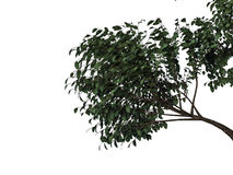 3d rendering of a foreground tree branch isolated on white backg. Round Stock Photo