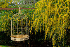 3D rendering of  a golden bird cage on garden. Freedom concept Stock Photo
