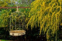 3D rendering of  a golden bird cage on garden Stock Photo