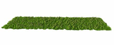 3d rendering of a grass patch isolated on white for architecture. Design or othe use Royalty Free Stock Photography