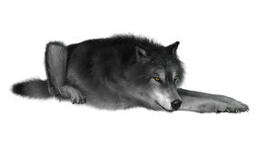 3D Rendering Gray Wolf on White vector illustration