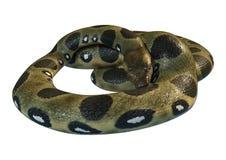 3D Rendering Green Anaconda on White Stock Photo