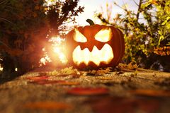 3d rendering of halloween jack-o-lantern on autumn leaves at foo Stock Photography