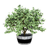 3D Rendering Homeplant on White Royalty Free Stock Images