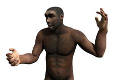 3D Rendering Homo Erectus on White. 3D rendering of a male Homo Erectus isolated on white background Stock Photos