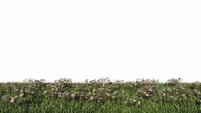 3d rendering of a horizontal seamless bushes. On a white background with grass Royalty Free Stock Photography