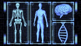 3D Rendering HUD Muscular anatomical man Body, Brain and DNA rotating including Skeleton in body analysis concept background