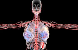 3D rendering illustration of the female lymphatic system royalty free stock photo