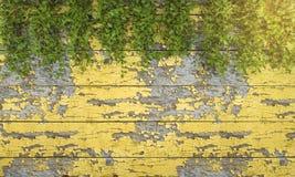 3d rendering ivy vegetation on art wooden wall Stock Photo