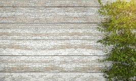 3d rendering ivy vegetation on vintage wooden wall Stock Photos