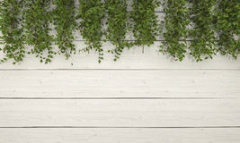 3d rendering ivy vegetation on white wooden wall Royalty Free Stock Photos