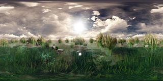 3d rendering of a lake with flying and swimming ducks Royalty Free Stock Images