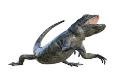 3D Rendering Chuckwalla on White Royalty Free Stock Photo