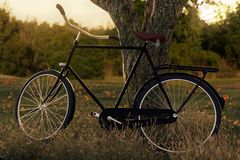 3d rendering of leaned black bicycle at tree in the meadow gras. Landscape in the evening sunlight Stock Photography
