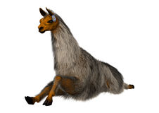 3D Rendering Llama or Lama on White Stock Photography