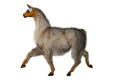 3D Rendering  Llama or Lama on White Royalty Free Stock Images