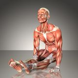 3d rendering of a male anatomy figure in exercise pose.  vector illustration