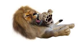 3D Rendering Male Lion on White. 3D rendering of a male lion isolated on white background Stock Photo