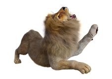 3D Rendering Male Lion on White. 3D rendering of a male lion isolated on white background Royalty Free Stock Images