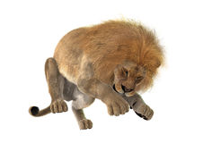 3D Rendering Male Lion on White Stock Photography