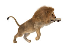 3D Rendering Male Lion on White Stock Image