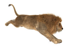 3D Rendering Male Lion on White Stock Photos