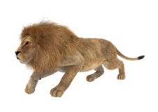 3D Rendering Male Lion on White Stock Photo