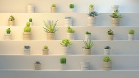 3d rendering of many pots with succulents on white abstract background. 3d rendering of many realistic cactuses with pots on white abstract shelf or stairs Royalty Free Stock Photography