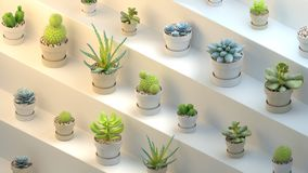 3d rendering of many pots with succulents on white abstract background. 3d rendering of many realistic cactuses with pots on white abstract shelf or stairs Stock Photo