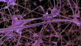 3D rendering of a network of neuron cells and synapses in the brain through which electrical impulses and discharges pass. 3D rendering of a network of neuron royalty free illustration
