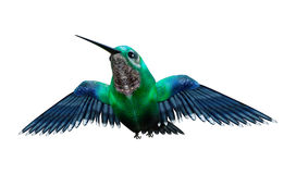 3D rendering Nuci ptaka na bielu Obrazy Royalty Free
