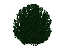 3d rendering of an outlined black bush with green edges isolated. On white background Stock Photos