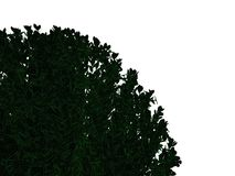 3d rendering of an outlined black bush with green edges isolated. On white background Royalty Free Stock Photo