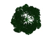 3d rendering of an outlined black tree with green edges isolated. On white background Royalty Free Stock Images