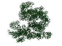 3d rendering of an outlined black tree with green edges isolated. On white background Royalty Free Stock Photos