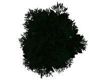 3d rendering of an outlined black tree with green edges isolated. On white background Stock Images