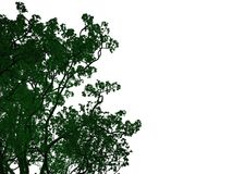 3d rendering of an outlined black tree with green edges isolated. On white background Stock Photos
