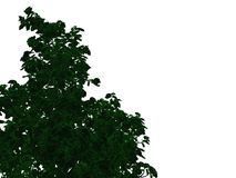 3d rendering of an outlined black tree with green edges isolated. On white background Stock Photography